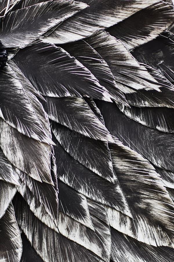 close upp Dekorativ svart fågel vektor illustrationer