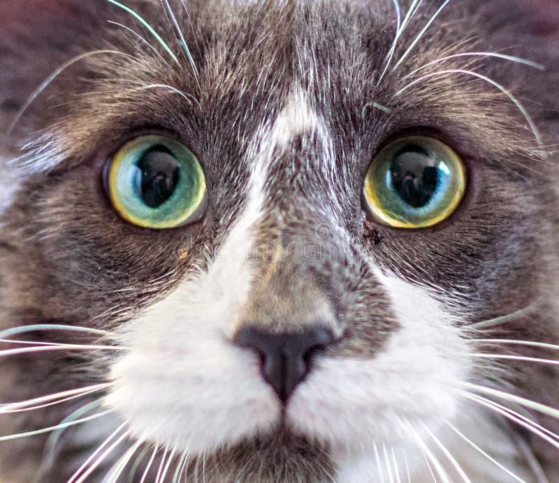 Close-upportret van een katje royalty-vrije stock foto
