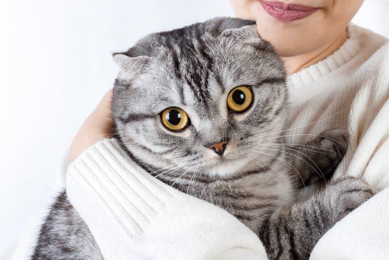 Close-upportret van een mooi meisje die Schots katje houden royalty-vrije stock foto