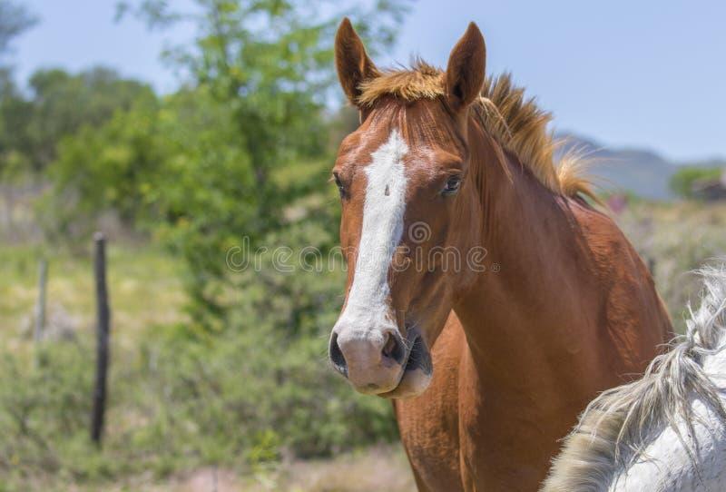 Close-upportret van een mooi paard royalty-vrije stock foto