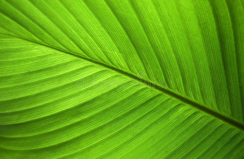 Close-upsamenvatting van de groene achtergrond van de bladaard stock foto