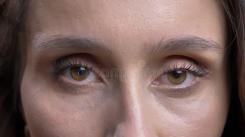 Close-upspruit van jong vrij Kaukasisch donkerbruin vrouwelijk gezicht met bruine ogen die recht camera bekijken royalty-vrije stock fotografie