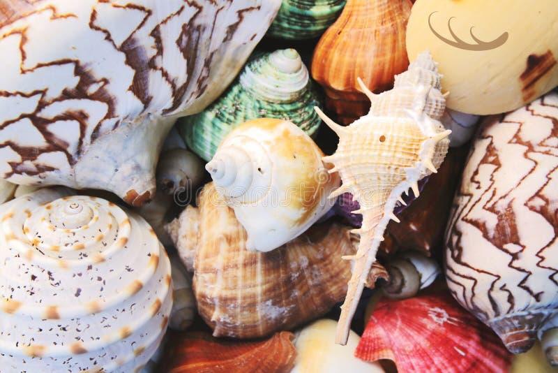 close-upstapel van kleuren overzeese shell royalty-vrije stock fotografie
