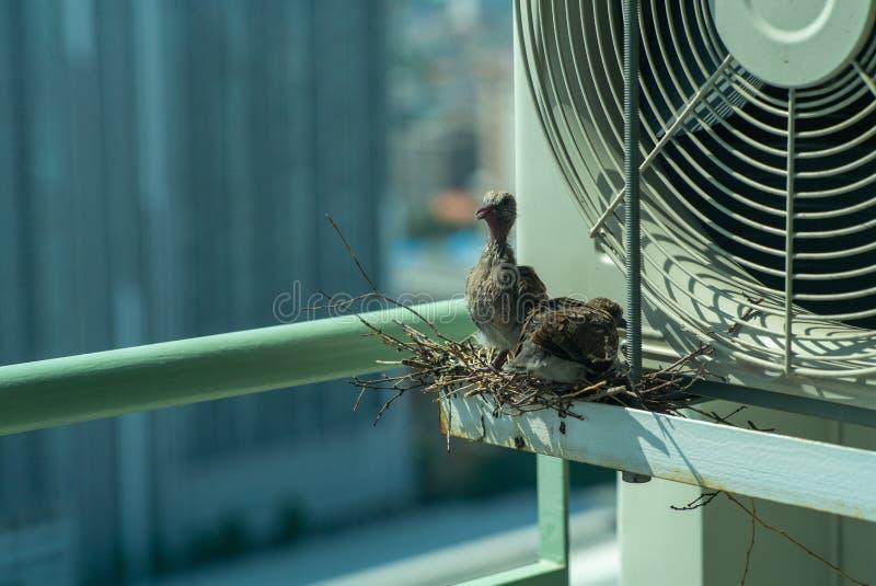Close-upvogels in een nest op de staalkooi van airconditioner bij het terras van hoge flat met vage cityscape achtergrond stock afbeelding