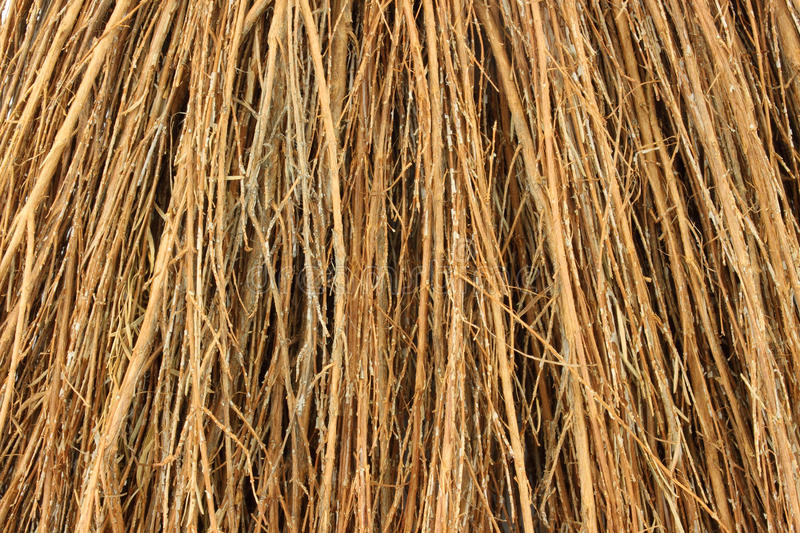 Close view cinnamon broom bristles. A very close view of the bristles of a cinnamon broom royalty free stock images