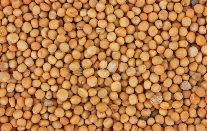 Download Close view mustard seed stock photo. Image of creamed - 12712570