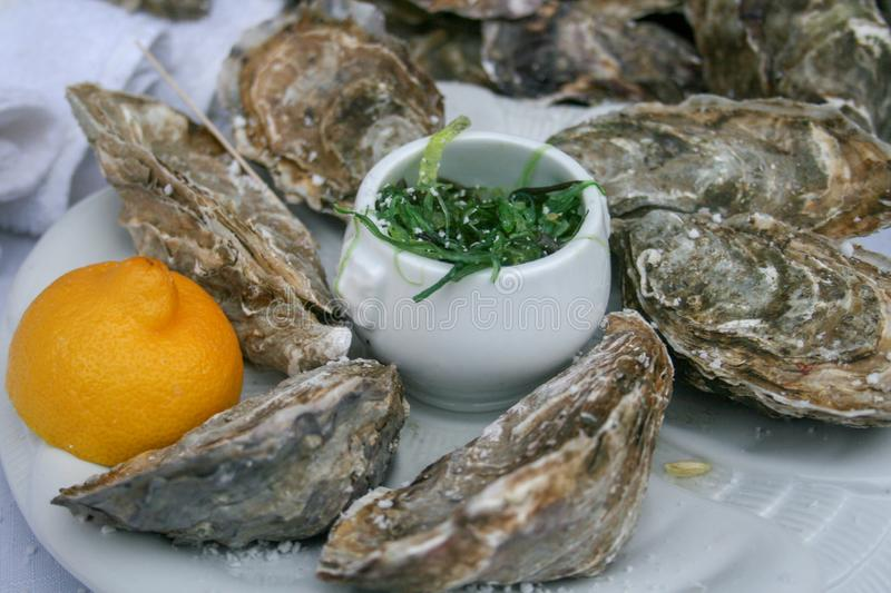 Closed oysters in a plate stock photography