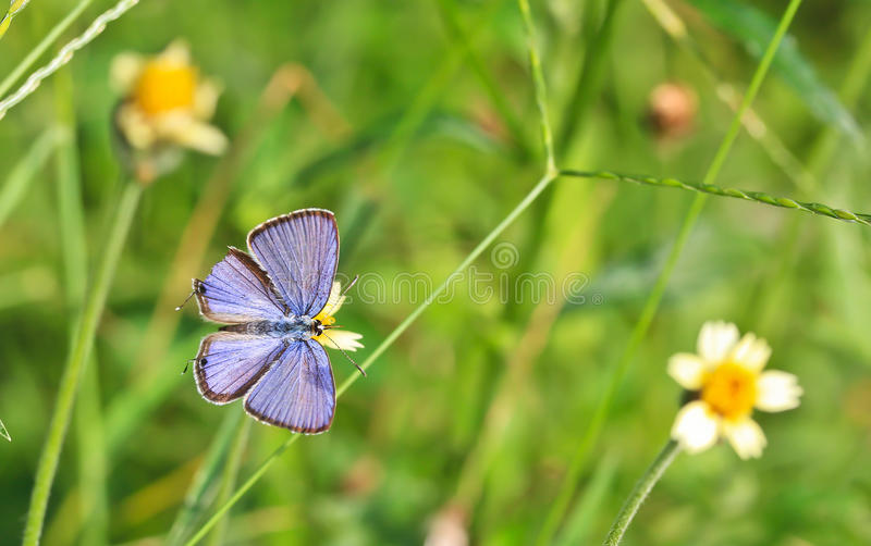 Download Closed up of butterfly stock image. Image of environment - 38246629
