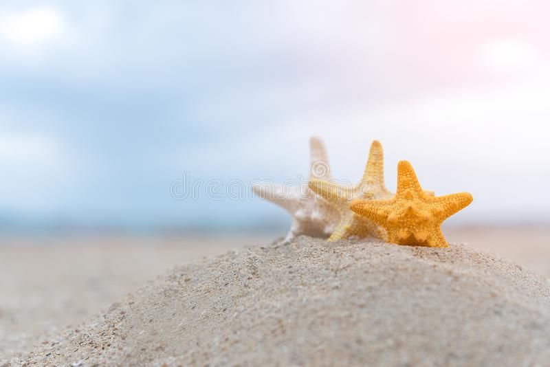 Closed up on colorful starfish beautiful sea shells on the seashore with blue sky background. Vacation and summer conceptual royalty free stock photos