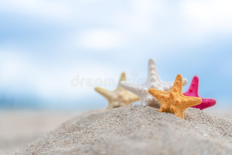 Closed up on colorful starfish beautiful sea shells on the seashore with blue sky background. Vacation and summer conceptual royalty free stock photo