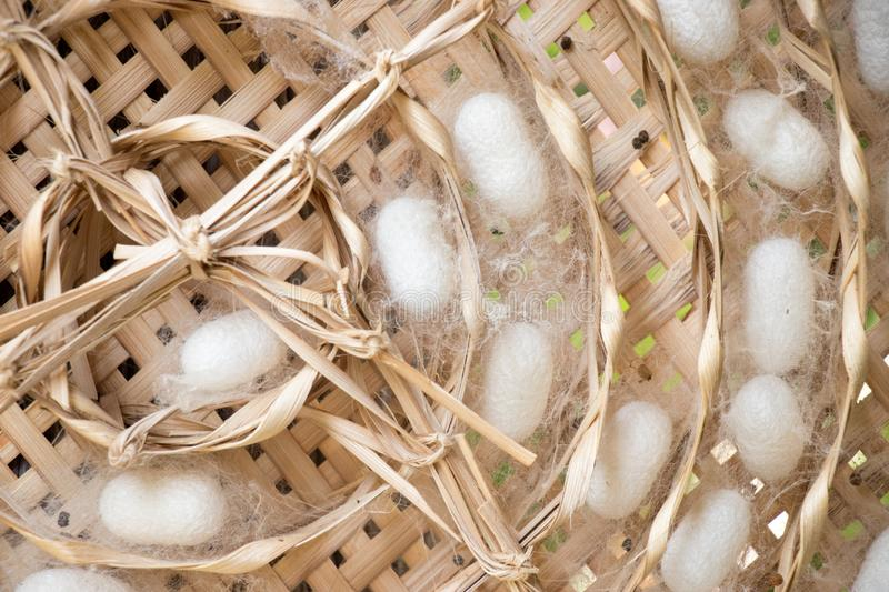 Closed up of group white cocoon of silk worm in weave nest. Background royalty free stock photos