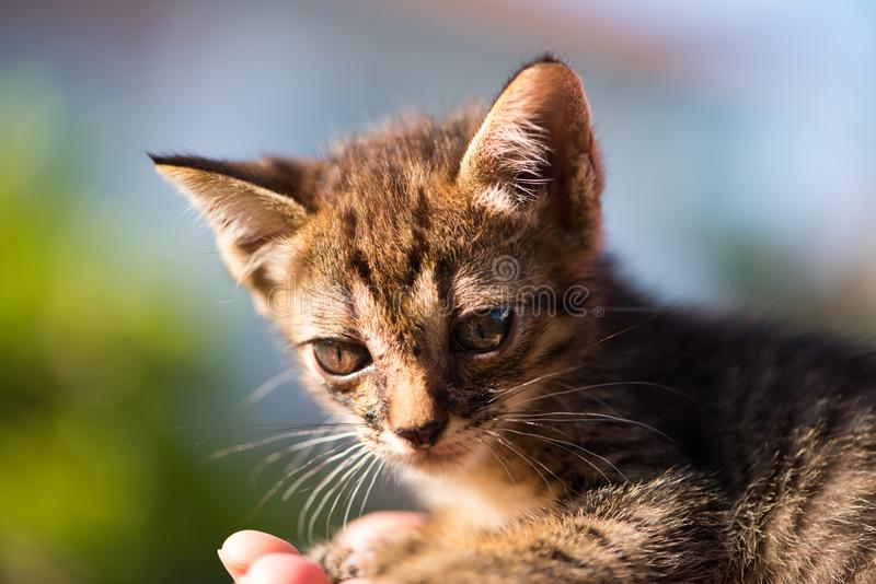 Closed up Little cat. Show pet and animal background royalty free stock image