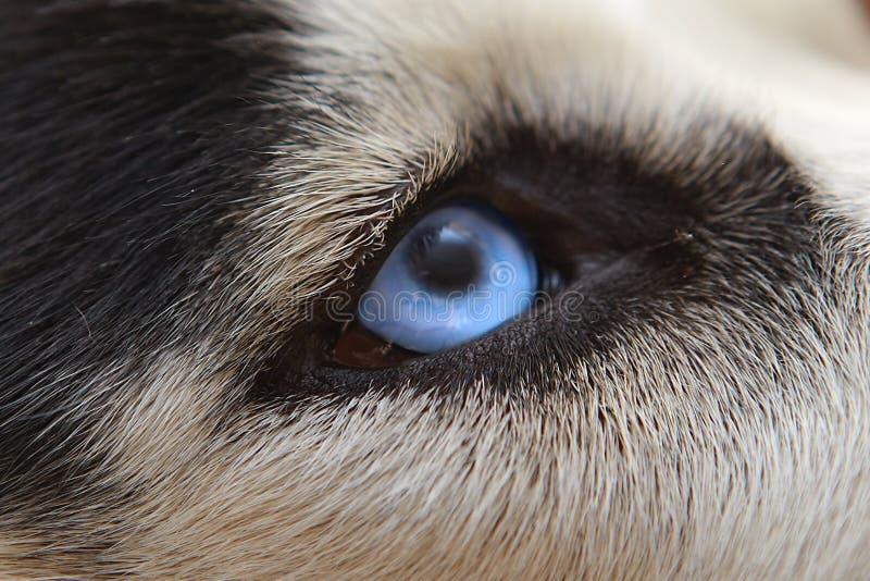 closen eyes ondsint sight upp wolf royaltyfria foton