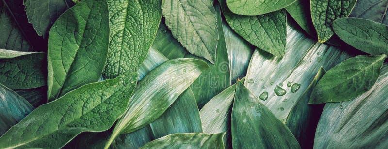 Closeu della disposizione del fondo organico di verde di struttura della foglia delle foglie macro immagini stock