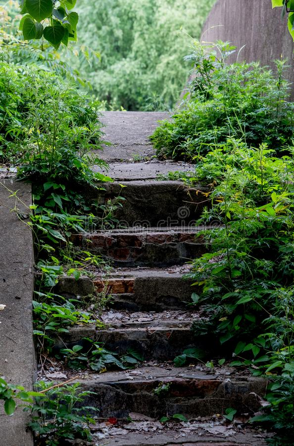 Abandoned old steps go through woods royalty free stock photos