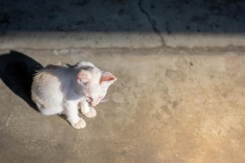Closeup abandoned white kitten with yellow sunlight for background. royalty free stock photography