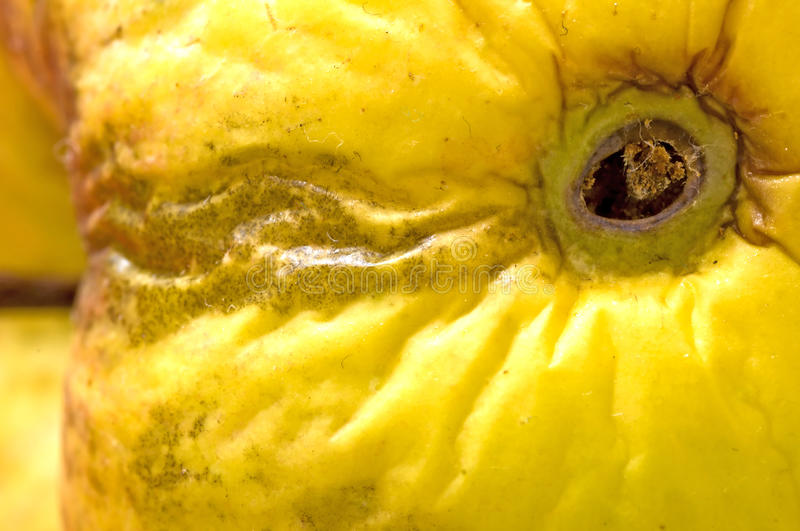 Apple with worm hole stock photography