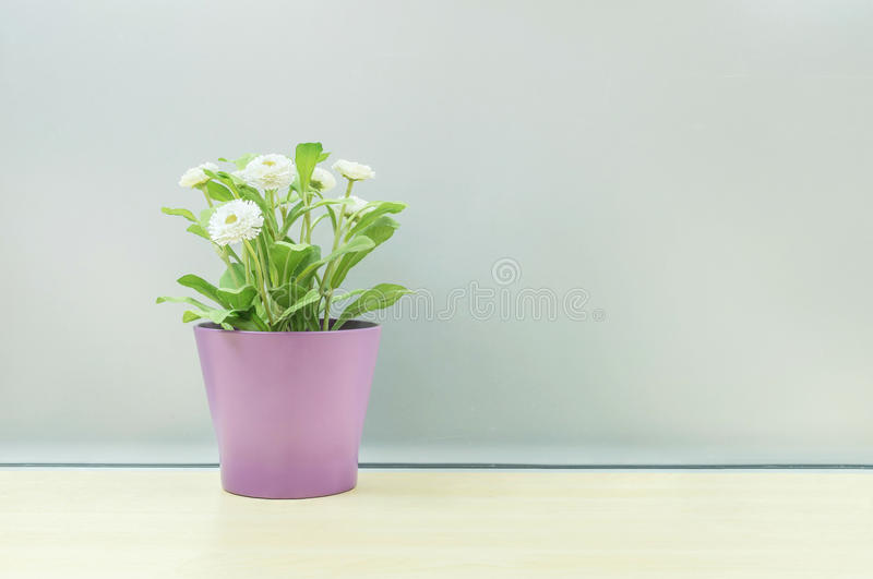 Closeup artificial plant with white flower on purple pot on blurred wooden desk and frosted glass wall textured background. Artificial plant with white flower on stock photography