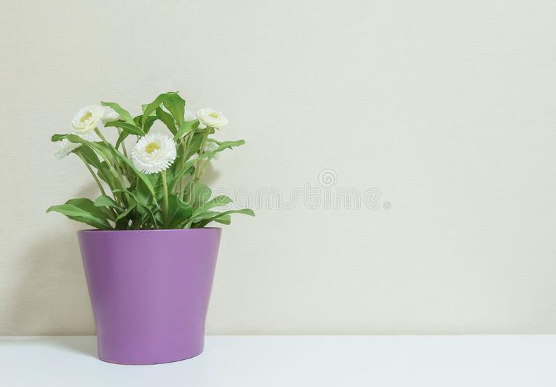 Closeup artificial plant with white flower on purple pot on blurred wooden white desk and wall textured background in room with co royalty free stock photo