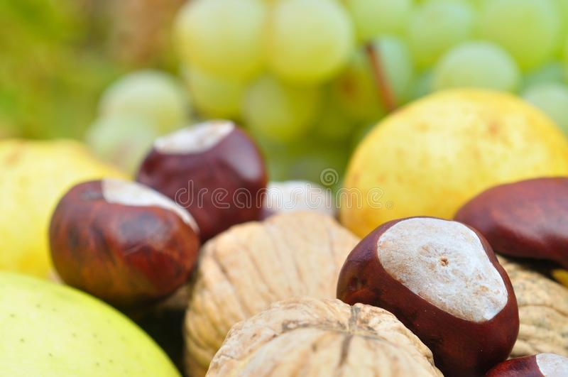 Closeup of autumn fruits for background stock photo