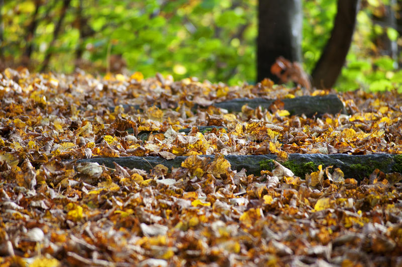 Closeup of autumn trail royalty free stock photos