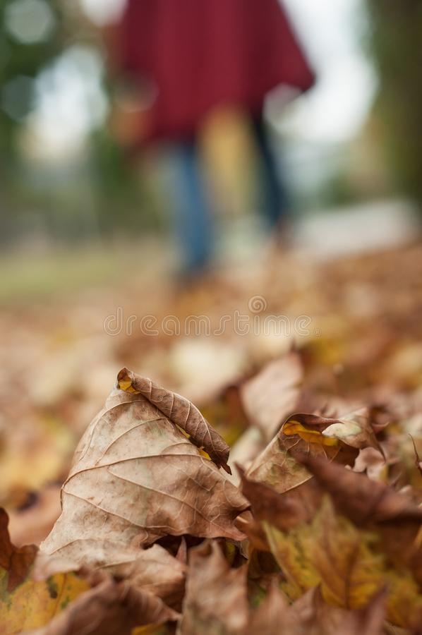 Autumnal leaves on the road with woman walking backgr. Closeup of autumnal leaves on the road with woman walking background stock photos