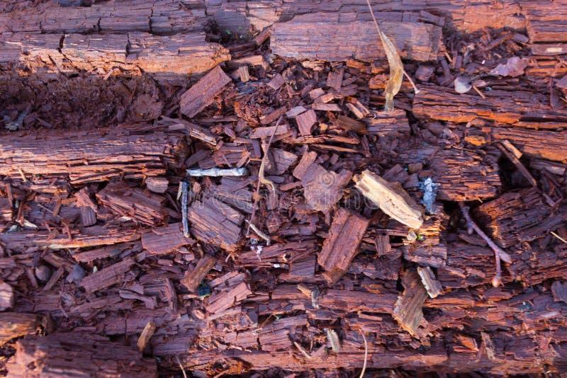 Closeup av att förmultna trädstammen arkivfoton
