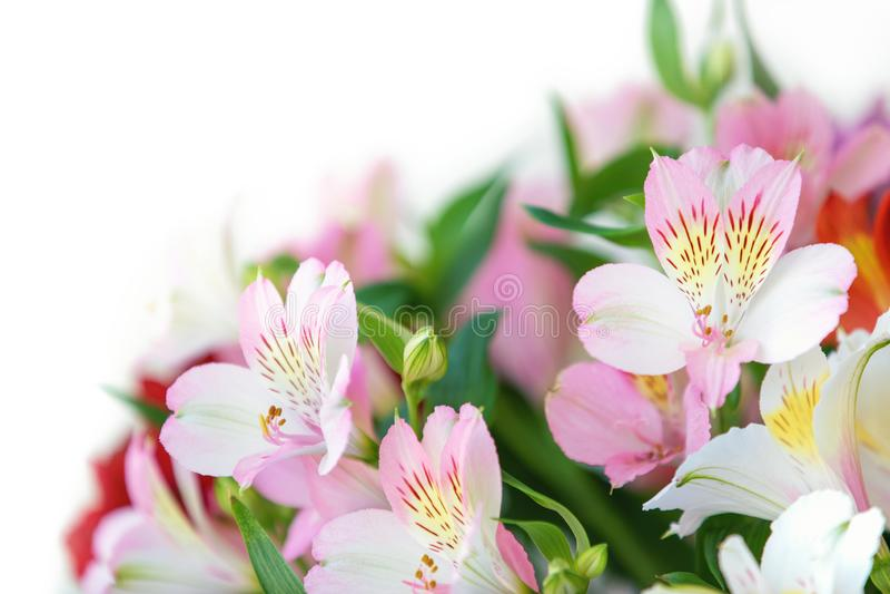 Closeup av den rosa alstroemeriablommabuketten royaltyfri foto