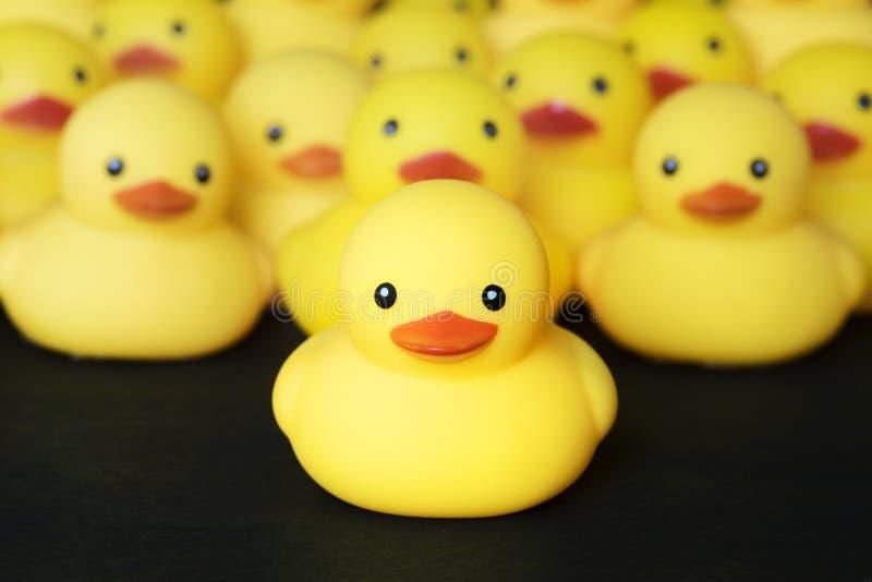 Closeup av den rubber duckiessamlingen royaltyfria foton