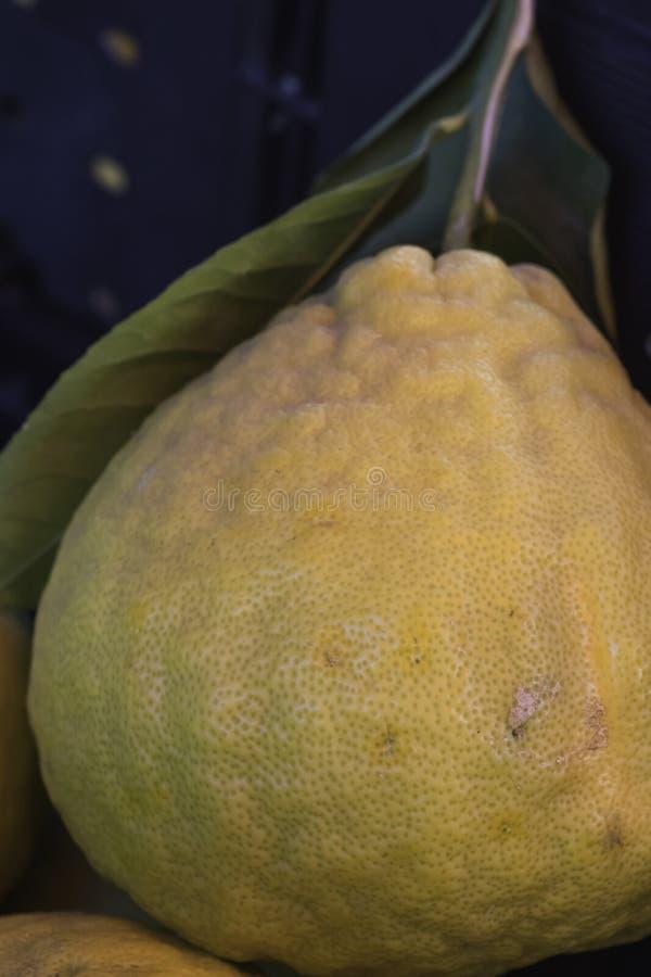 Closeup av den stora gropiga citronen med det fäste bladet royaltyfria bilder