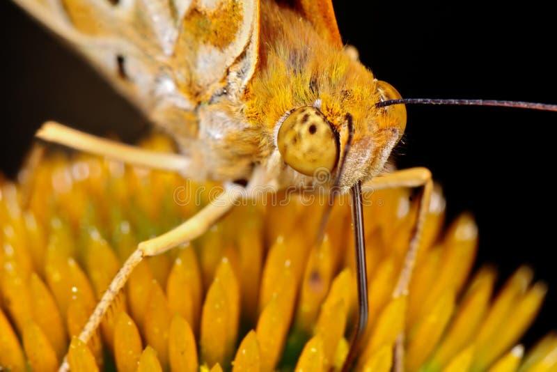 Closeup av en fjäril på en blomma arkivfoton