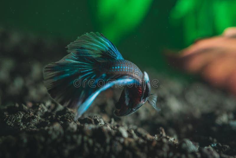 Closeup av en härlig exotisk färgrik liten fisk royaltyfri bild