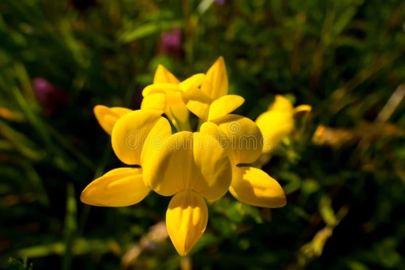 Closeup av en liten gul blomma fotografering för bildbyråer