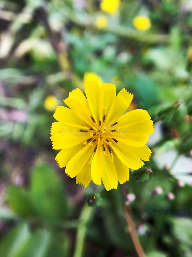 Closeup av en liten gul blomma arkivfoto