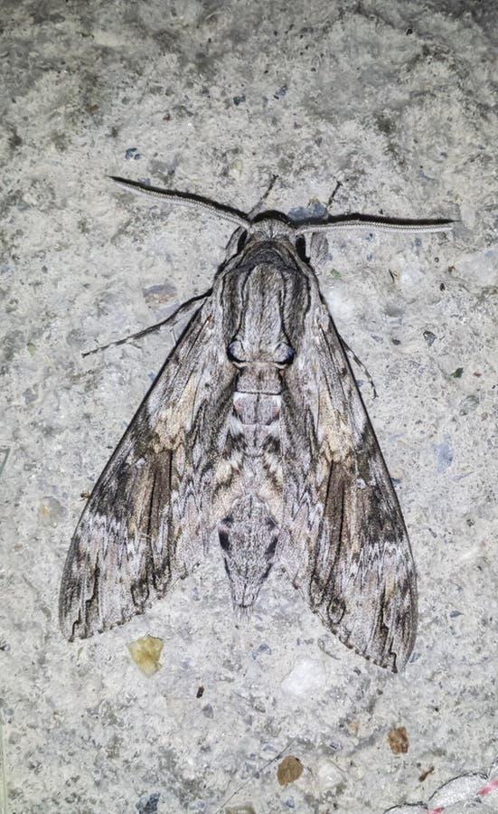 Closeup av en mal som blandar i miljön royaltyfria foton