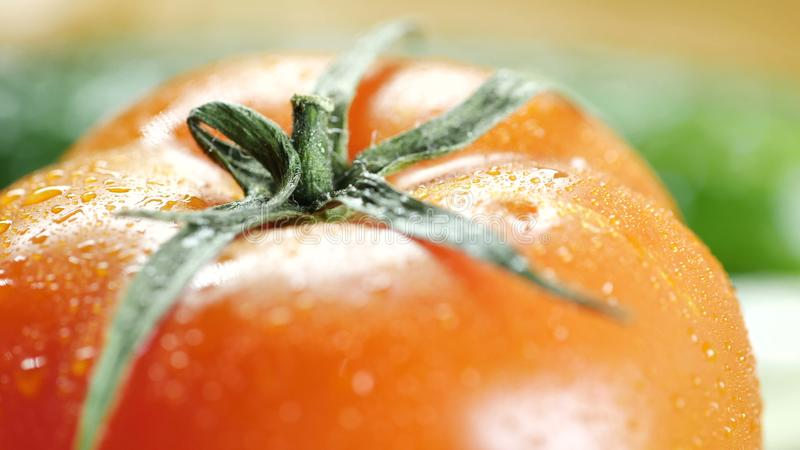 Closeup av en röd tomat med vattensmå droppar som skjutas från över royaltyfri foto