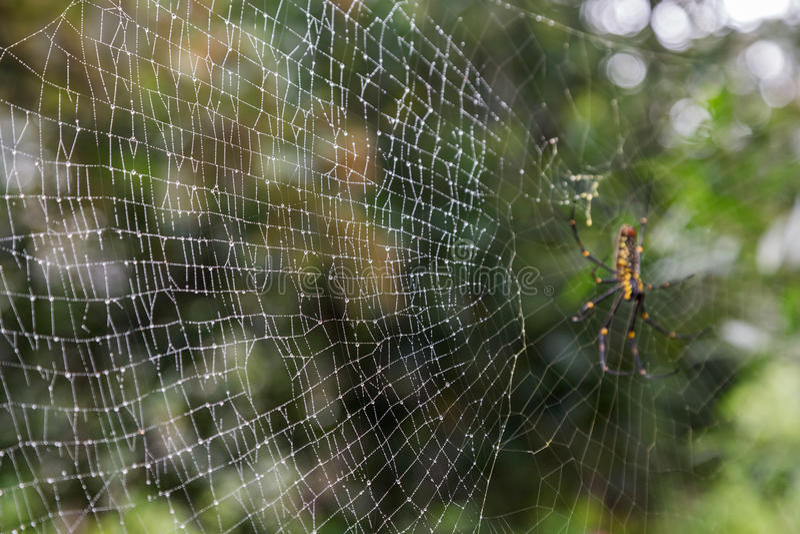 Closeup av en våt spiderweb fotografering för bildbyråer