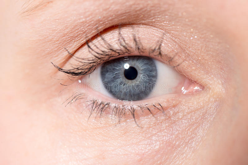 Closeup av ett öga för kvinna` s royaltyfri bild