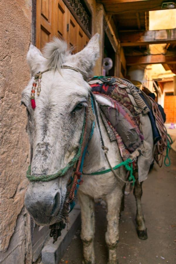 Closeup av ett bärande material för häst i Medinaen av Fez Marocko arkivfoton