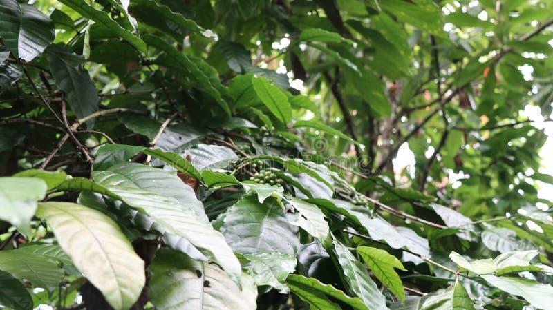 Closeup av ett druvaträdblad med suddigt en grön lövrik bakgrund arkivbilder