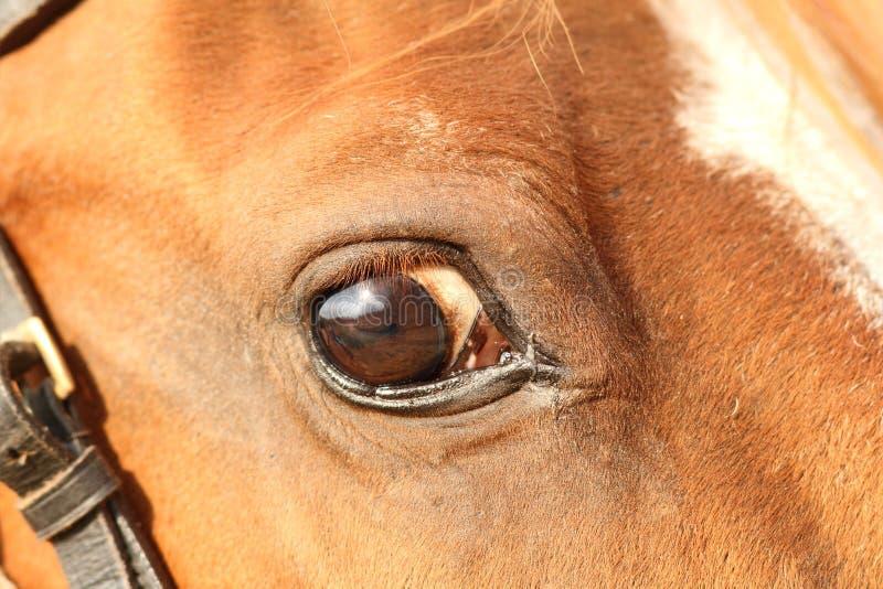 Closeup av ett hästöga arkivfoton