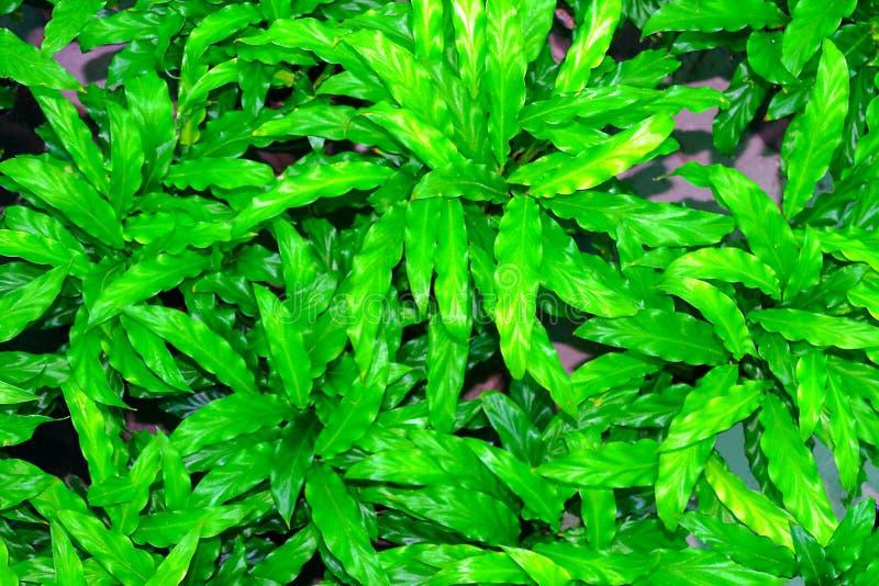Closeup av frodiga gr?na sidor av v?xter fotografering för bildbyråer