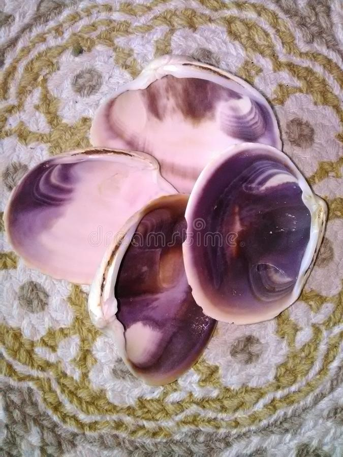 Closeup av fyra musslaskal med abstrakta purpurfärgade designer på ett vävt mattt fotografering för bildbyråer