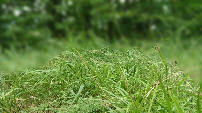 CLOSEUP av gräsblad royaltyfria foton