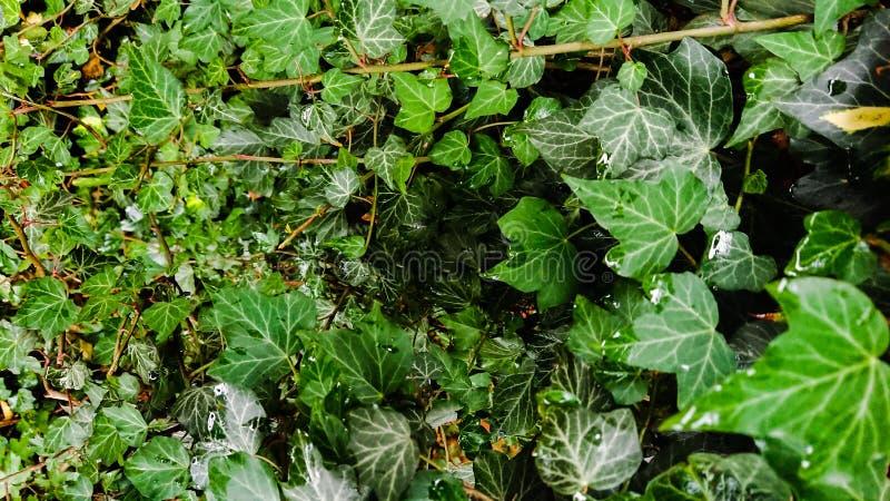 Closeup av gräsplansidor i ett mest forrest royaltyfri bild
