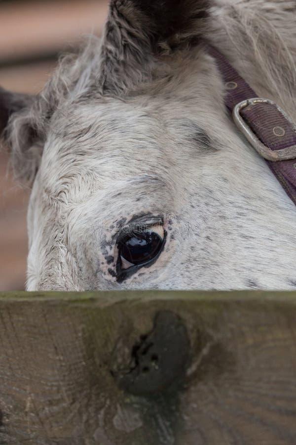 Closeup av hästögat royaltyfria foton