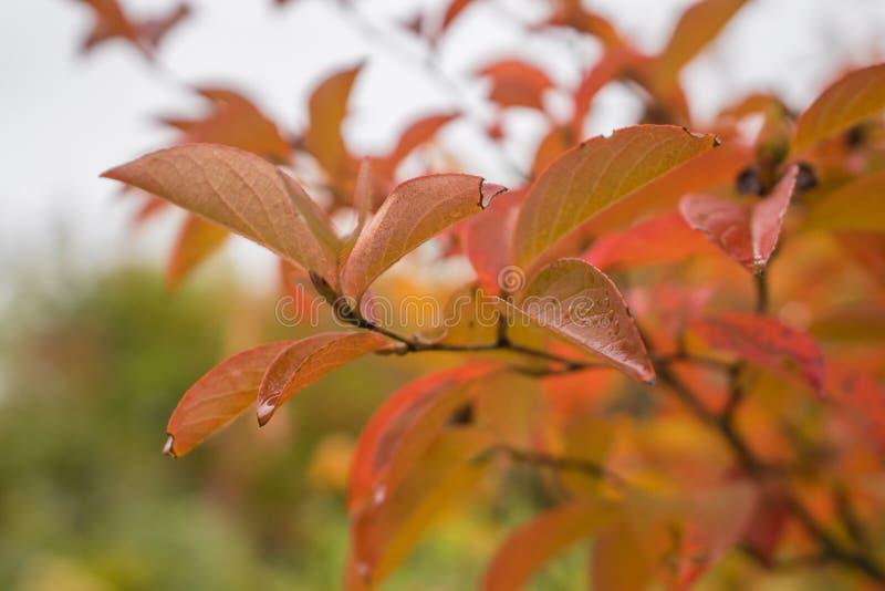 Closeup av höstsidor i trädgård arkivfoto
