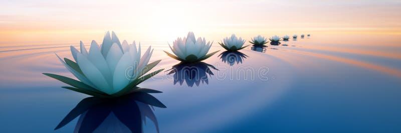 Closeup av lotusblommablommor i ett lugna hav på solnedgången royaltyfri illustrationer