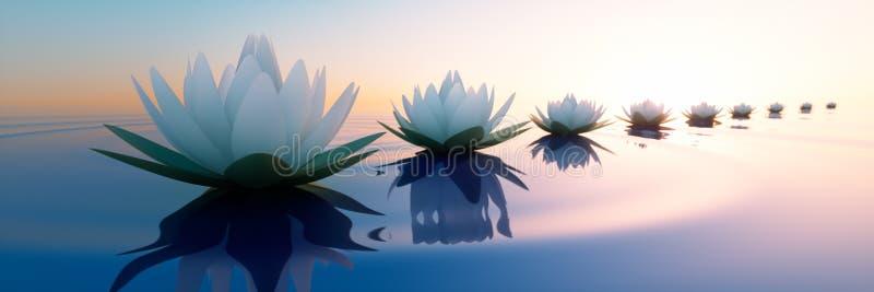 Closeup av lotusblommablommor i ett lugna hav på solnedgången vektor illustrationer