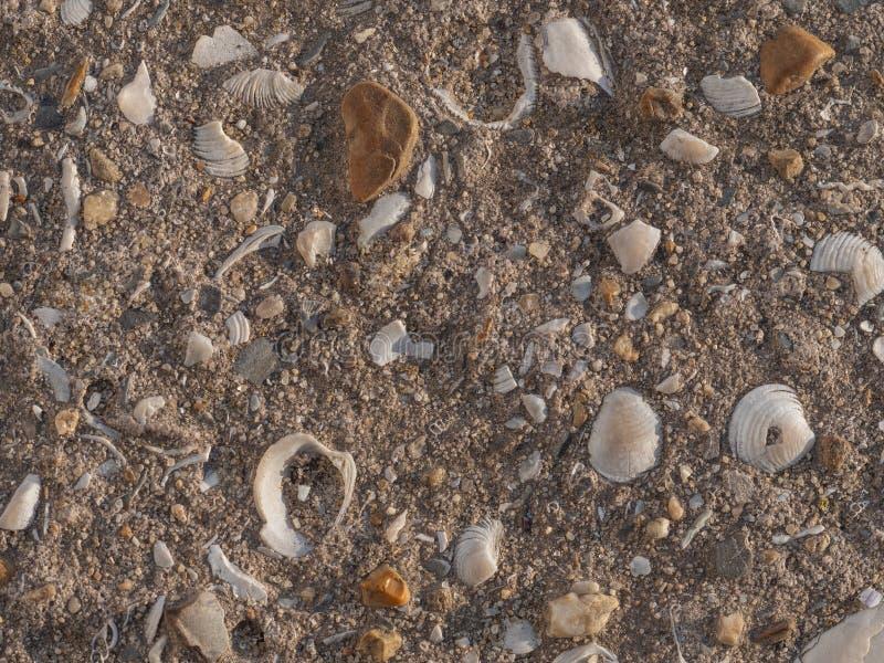 Closeup av riden ut konkret yttersida med sand, stenar och snäckskalfragment royaltyfri bild